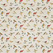 Birds 513