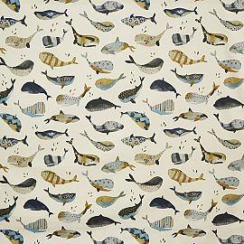 Whale pacific grijs