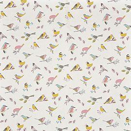 Birds 815